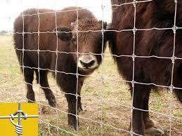 Photo of Hold dyrene inde med flotte og sikre hegn